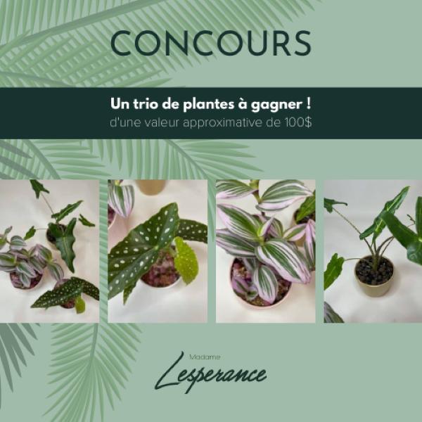 Concours Un Superbe Trio De Plantes à Gagner!